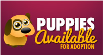 Puppies Available For Adoption